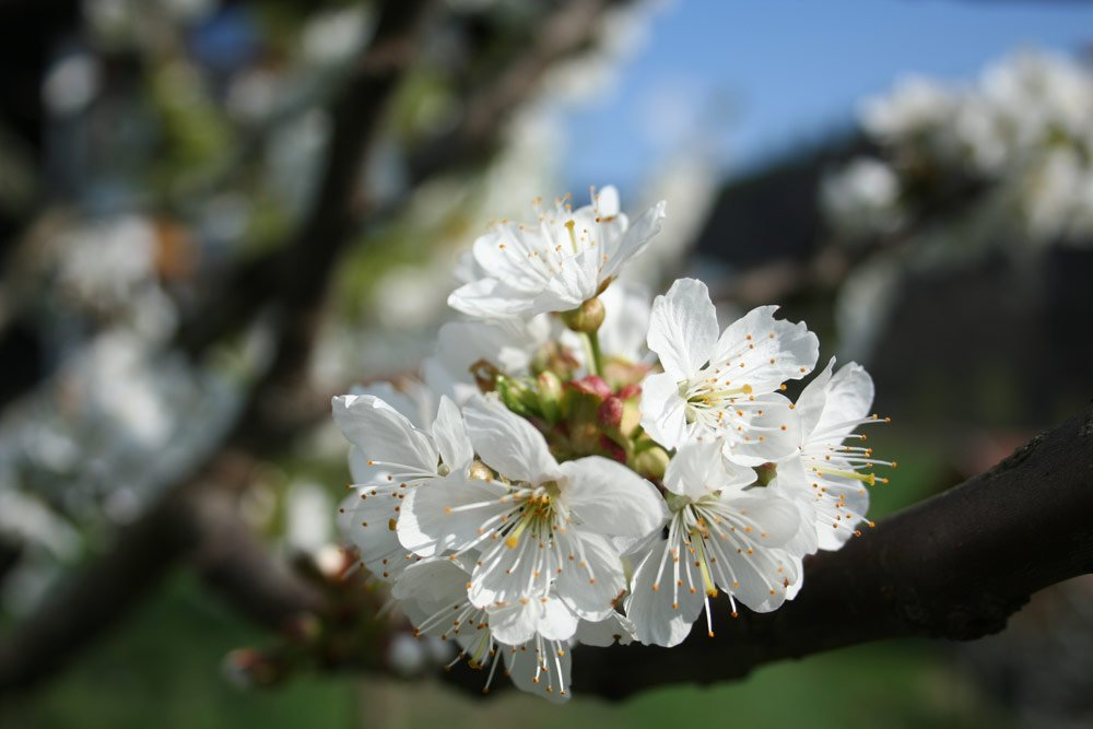 Frühlingserwachen am Punterhof